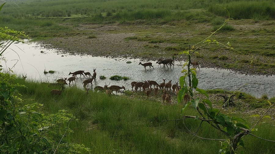 A flock of deer by the river