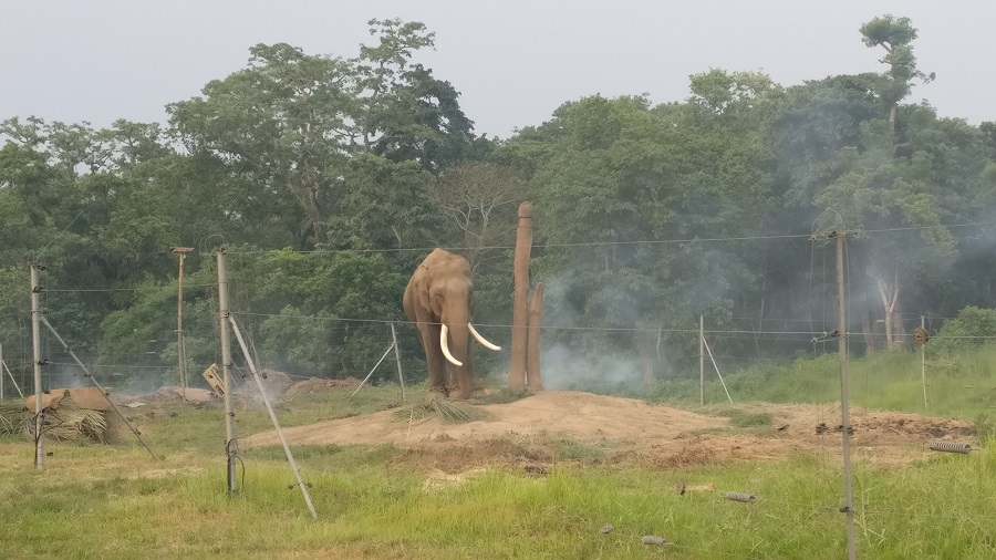 Elephants are used for patrolling the park at Chitwan