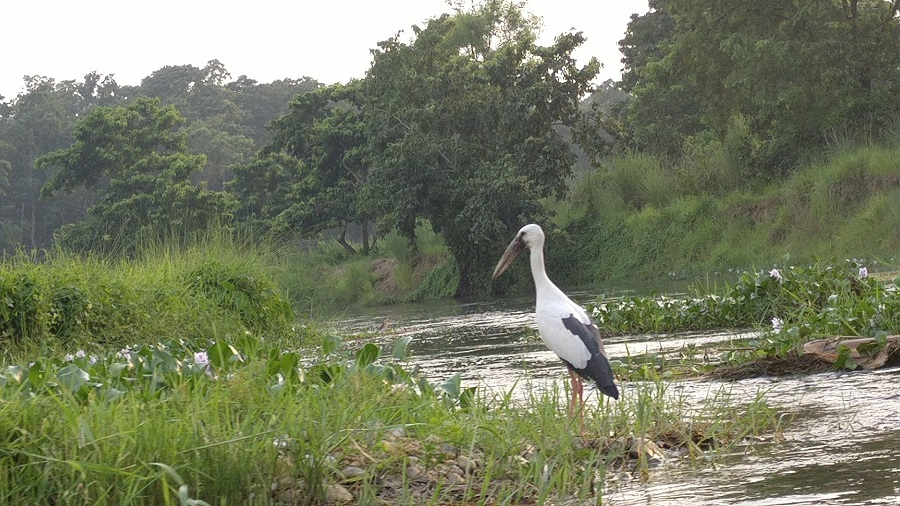 One of the many beautiful birds we saw at Chitwan